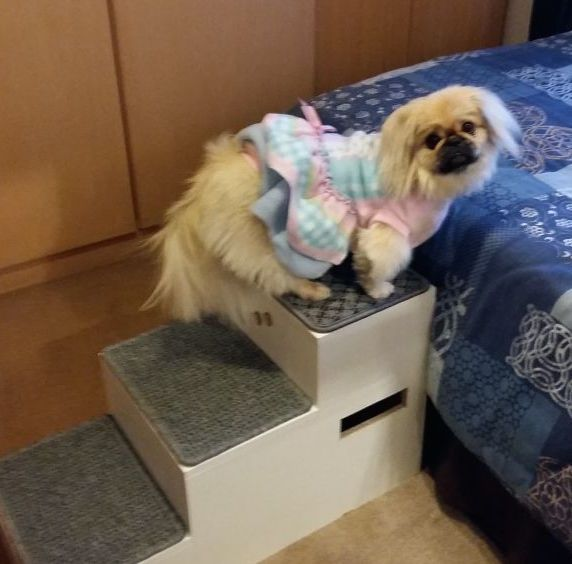 Surgery for Princess the Peke Logo
