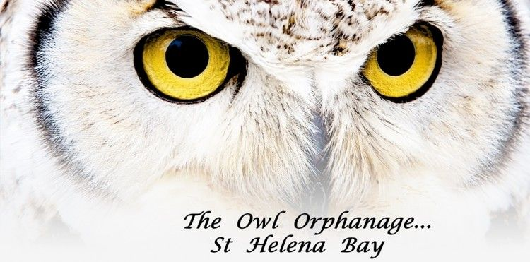 The Owl Orphanage Logo