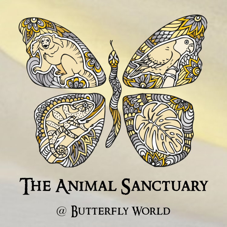 The Animal Sanctuary @ Butterfly World