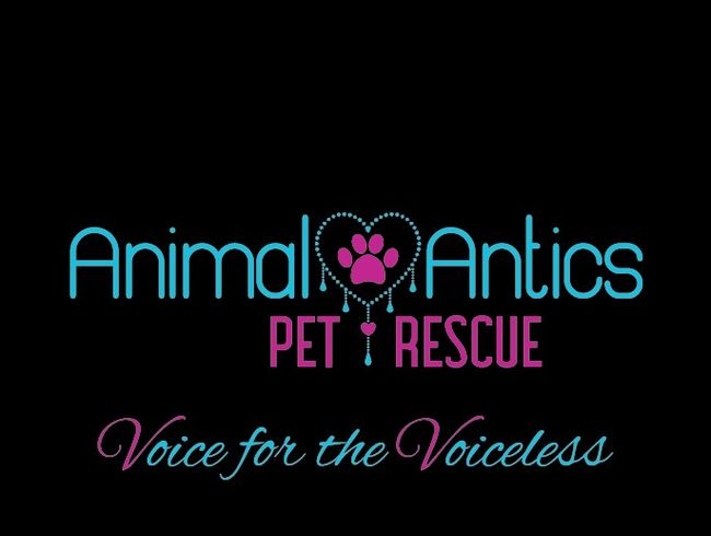 Animal Antics Pet Rescue