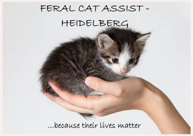 Feral Cat Assist Heidelberg Logo