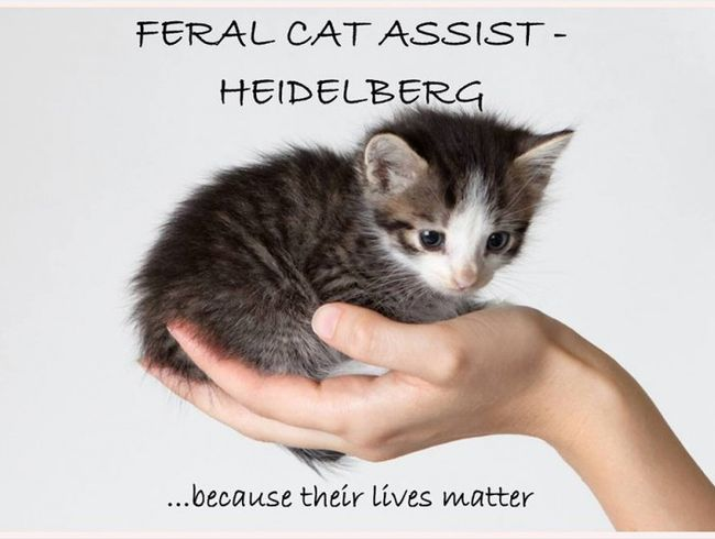 Feral Cat Assist Heidelberg