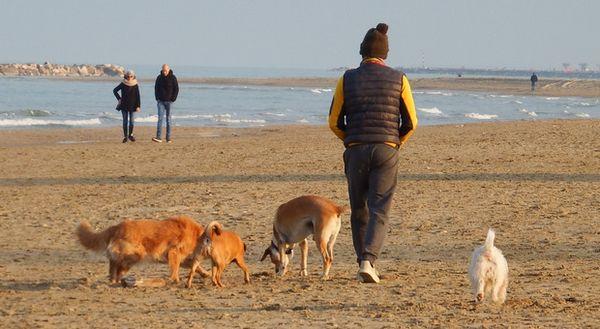 San Benedetto, i padroni di Fido contro il Comune: «Riaprite la spiaggia». Riviera delle palme unica per mancanza di servizi