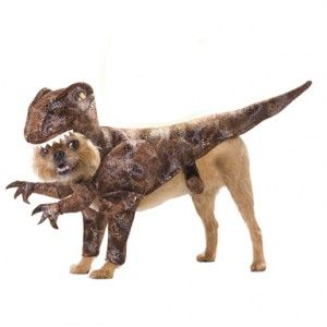 [Image: dog-raptor-costume-300x300.jpg]