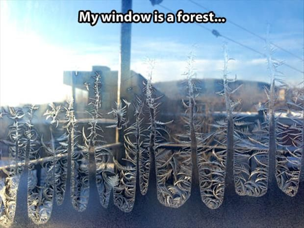 [Image: funny-frost.jpg]