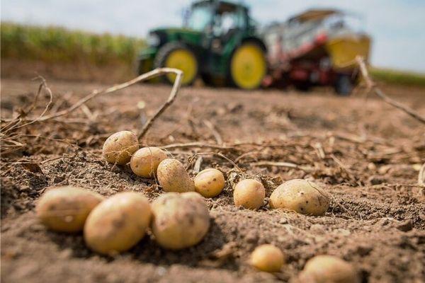 Kühler April bereitet Kartoffelbauern Probleme   Freie Presse - Hohenstein-Ernstthal