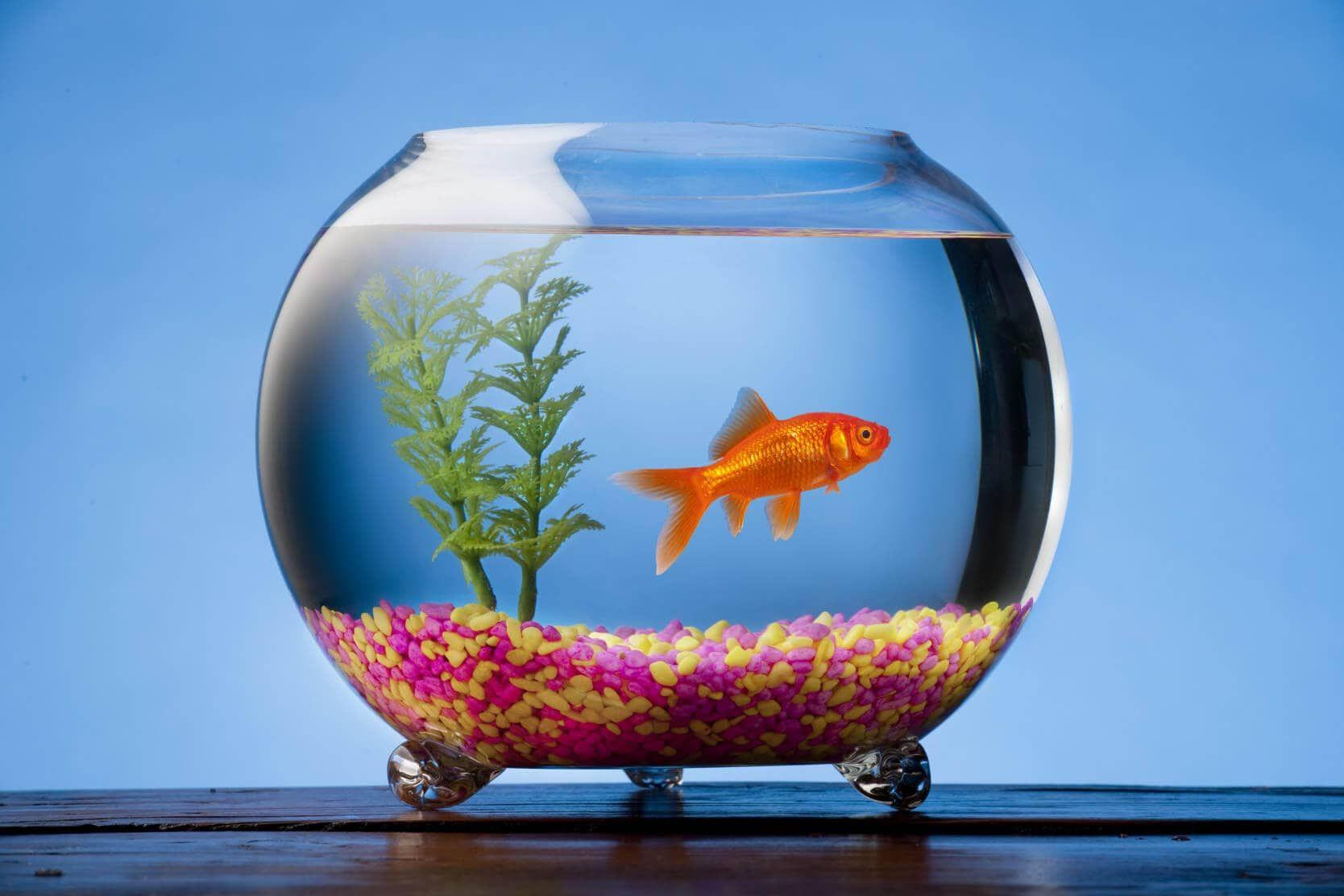 [Image: aquarium.jpg]