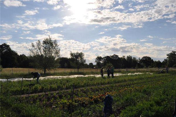 HA+ Mehr Leute, größere Fläche: Solidarische Landwirtschaft wächst und gedeiht