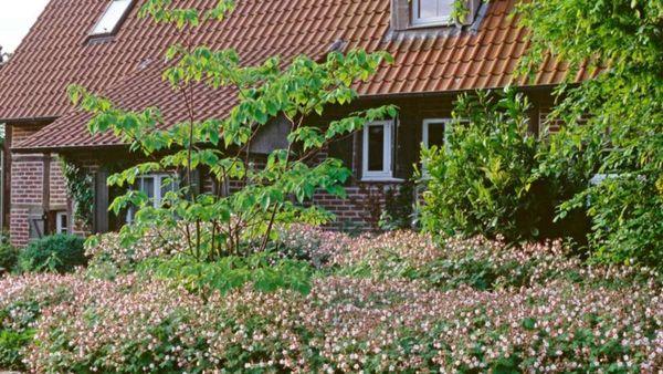 Sehr schnell zum grünen Garten: Gestalten mit Turbopflanzen