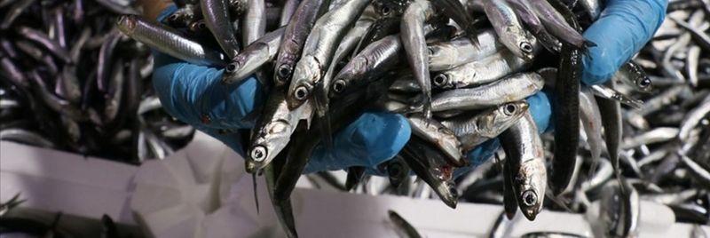 Yasa dışı balık avcılığına ceza yağdı