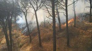 Torna a bruciare il Vesuvio, fiamme nel Parco nazionale: «Non è escluso il dolo»