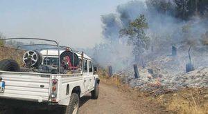 Parco del Vesuvio, ritornano i piromani: pinete in fiamme, distrutti due ettari