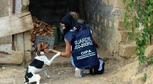 Abbandono e maltrattamento di animali, sequestrati quattro cani a Pomigliano