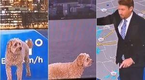 Previsioni meteo, il cane