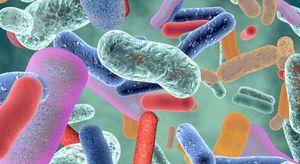 Scoperto incredibile collegamento fra salute dell'intestino ed invecchiamento