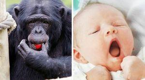 Bambini piccoli: ridono come gli scimpanzé, vocalizzi e risate anche quando inspirano