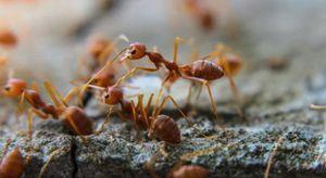 Formiche in casa a mai più, bastano 5 mosse