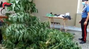 Torino, coltivano piante di cannabis: arrestati un 39enne e un 61enne