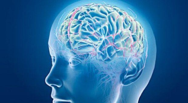 cervello continua sentire anche punto morte ricostruito cosa avviene negli ultimi istanti