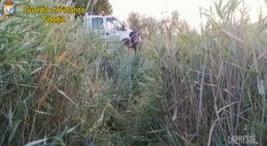 Foggia, scoperta piantagione di cannabis: arrestato un 24enne