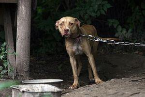 Oipa, sequestrati per maltrattamento e abbandono 4 cani: denunciato proprietario