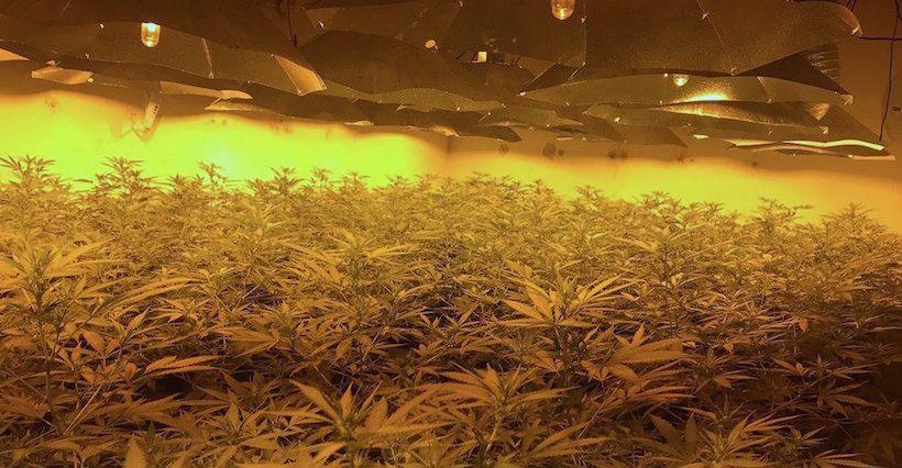 La police britannique a trouvé une énorme plantation de cannabis dans un abri nucléaire