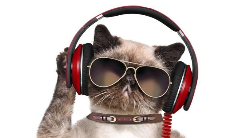 A Belga macskás videókat vár az új klipjéhez