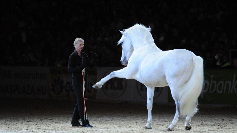 Lajkó Félix lipicai lovakkal lép fel Óbudán