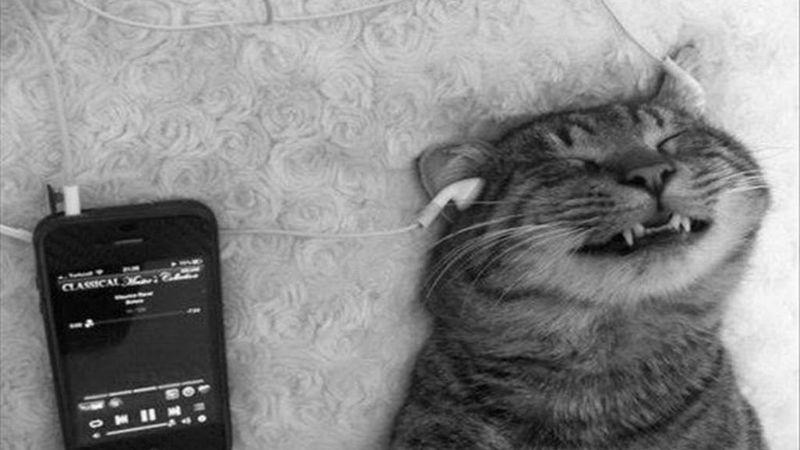 Megjelent az első kifejezetten macskáknak szánt zenei album