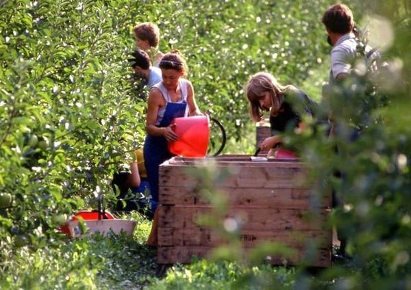 Distretto biologico su tutto il territorio agricolo provinciale, i partiti non si scaldano per il voto