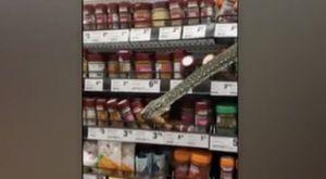 Choc al supermercato, serpente striscia fuori dagli scaffali. Una cliente: «Mi ha guardato dritto negli occhi»