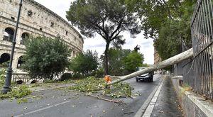 Bomba d'acqua su Roma, paura al Colosseo: albero cade sulla strada vicino ai turisti