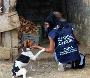 Guardie ecozoofile: in due anni 50 interventi a tutela degli animali - Libertà Piacenza
