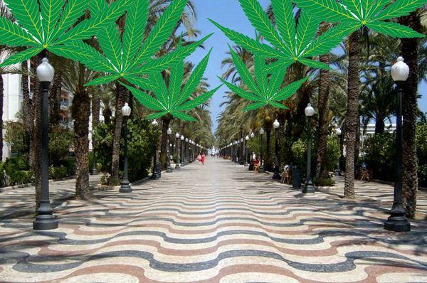 Alicante legaliza los clubes de cannabis