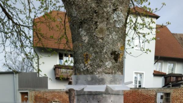 Laa: Natürlicher Schutz vor der Miniermotte