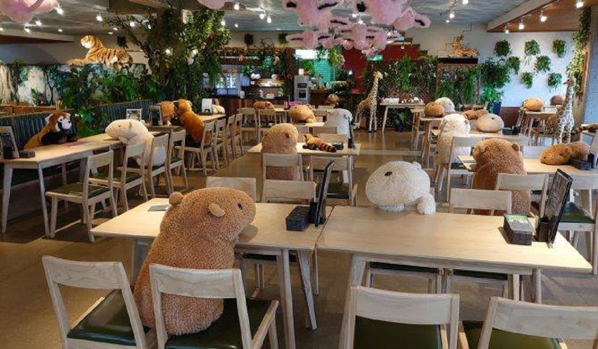 Coronavirus Giappone zoo usa peluches per distanziamento | Notizie