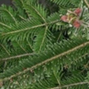 """Посади надежда"": Купи жива елха за Коледа, за да се роди дете"