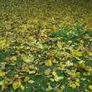 Есента идва с понижение на температурите