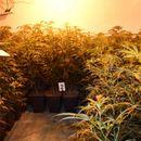 U Plandištu otkrivena laboratorija za uzgoj marihuane