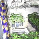 U Novoj Crnji otrivena laboratorija za proizvodnju marihuane