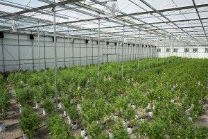 Pot Stock: Could This Be the Next Big Marijuana Stock?