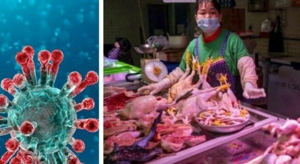 Covid, l'Oms: «La fine della pandemia è ancora lontana, stop vendita animali selvatici nel mercati»