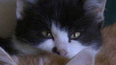 Nema kijanja, vakcina za ljubitelje mačaka
