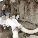 U Meksiku pronađene kosti mamuta