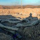 Okamenjeno drvo staro 20 miliona godina otkriveno na ostrvu Lezbos