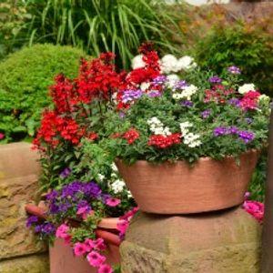 Koje biljke možete odmah da iznesete, a koje treba da sačekaju Baba Martu