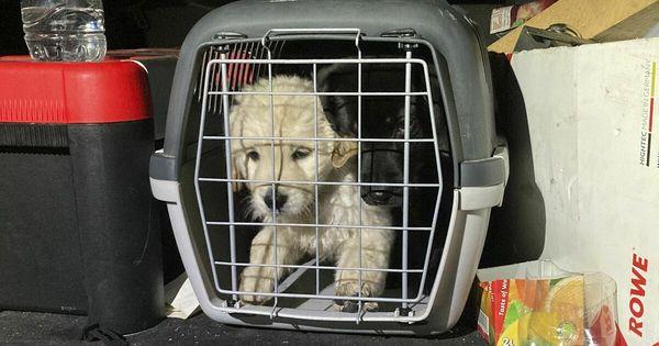 Illegaler Hundewelpen-Transport in Bayern gestoppt