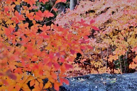 【京都紅葉情報】11個能夠享受京都紅葉的人工庭園推薦