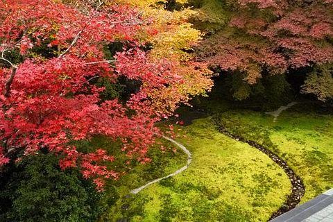 【京都紅葉情報】10個壯麗的京都紅葉景點推薦