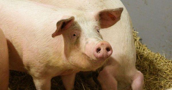 Tierschutzvolksbegehren dreht im Parlament weitere Runde